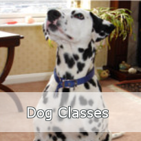 Dog Classes Button