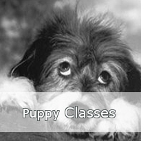 Puppy Classes Button